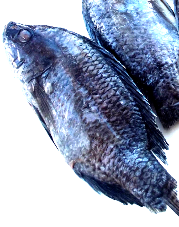 Grilled tilapia fish recipe for What is tilapia fish