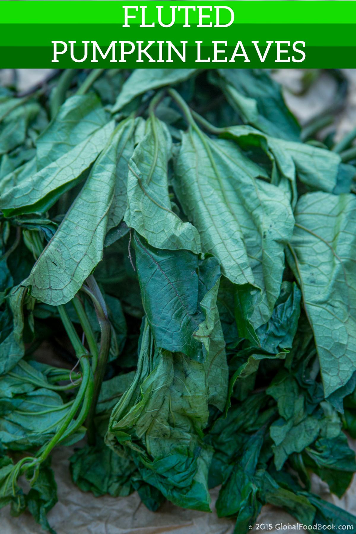 benefits of fluted pumpkin (telfairia occidentalis)