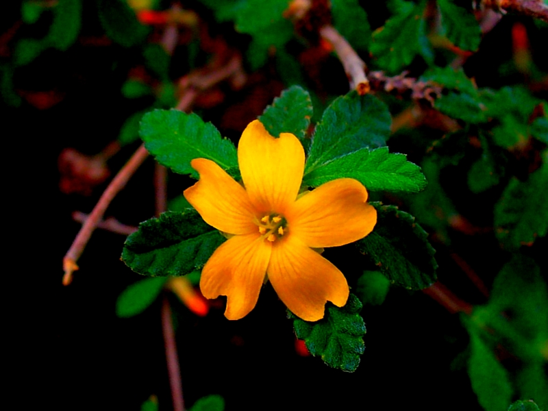 mind-blowing benefits of damiana herb, Skeleton