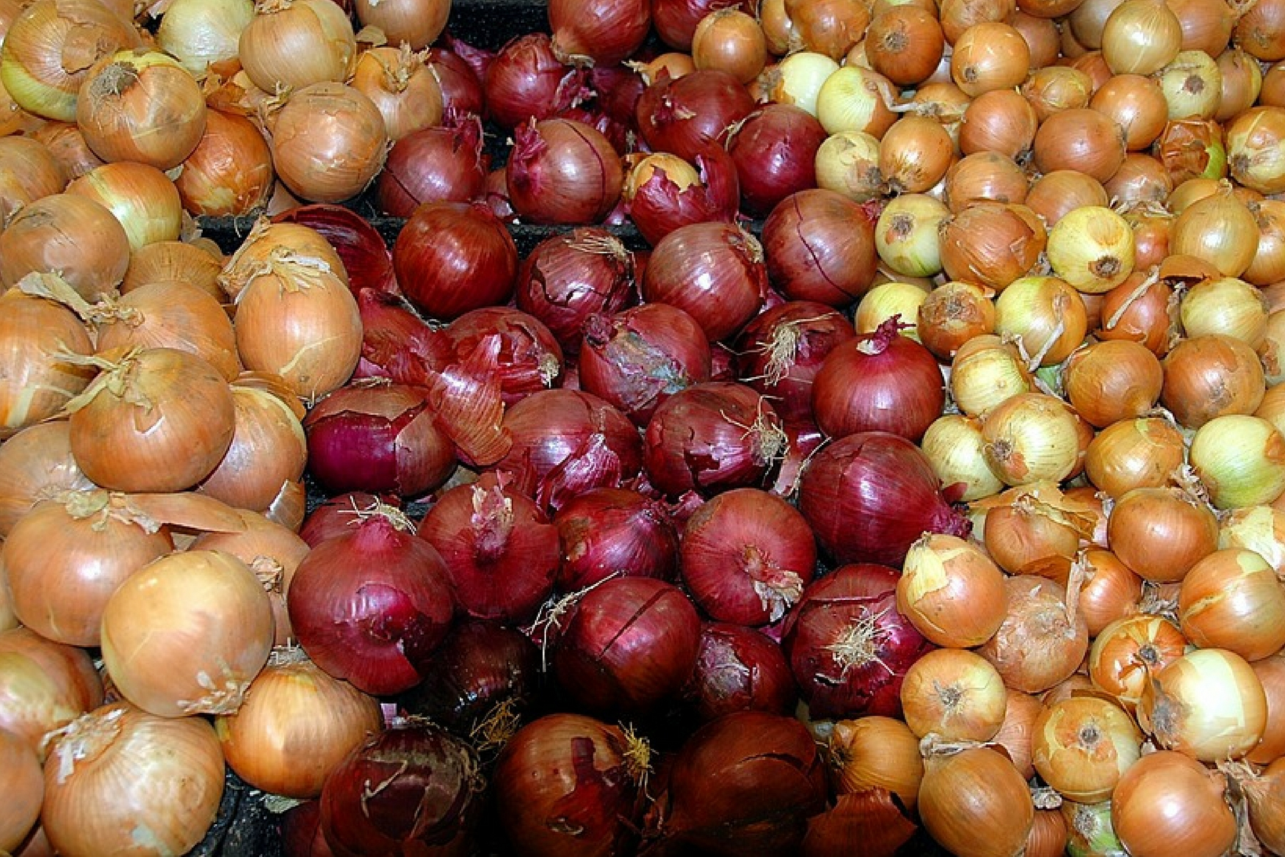 White and red onions