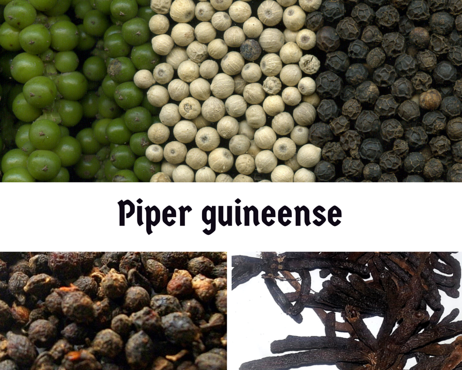 DO YOU KNOW THE HEALTH BENEFITS OF PIPER GUINEENSE 'UZIZA'?