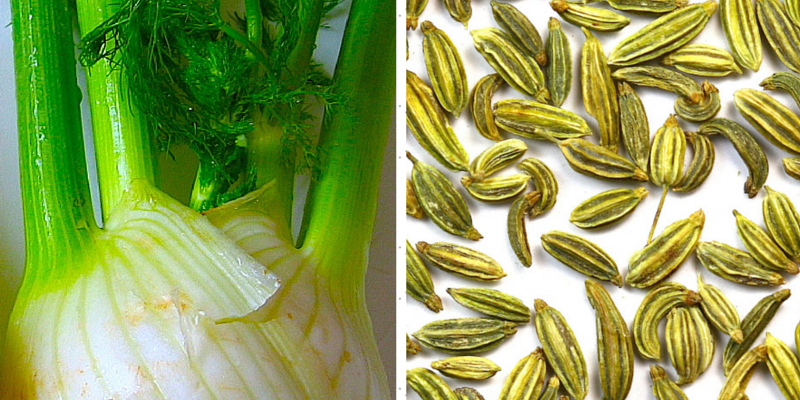 WHAT HAPPENS WHEN YOU INCLUDE FENNEL IN YOUR DIET-