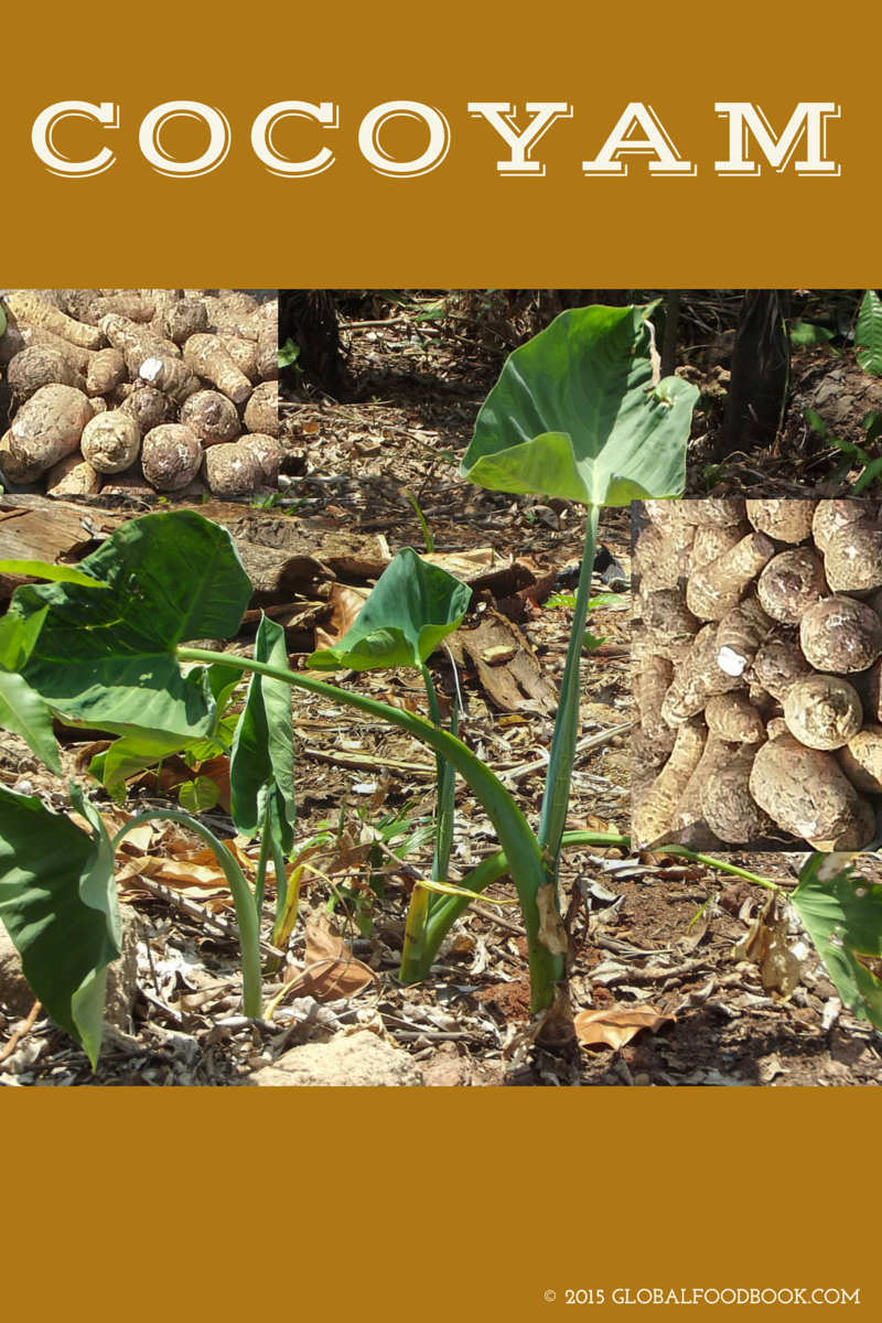 BENEFITS OF COCOYAM (TARO|COLOCASIA ESCULENTA)