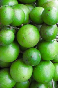 INCREDIBLE BENEFITS OF THE GENIPE FRUIT (1)