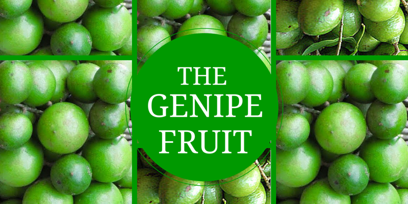 INCREDIBLE BENEFITS OF THE GENIPE FRUIT