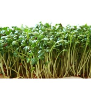 Curled Cress Seed Sprouts (1)