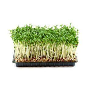 15 Astonishing Benefits Of Garden Cress Halim Seeds