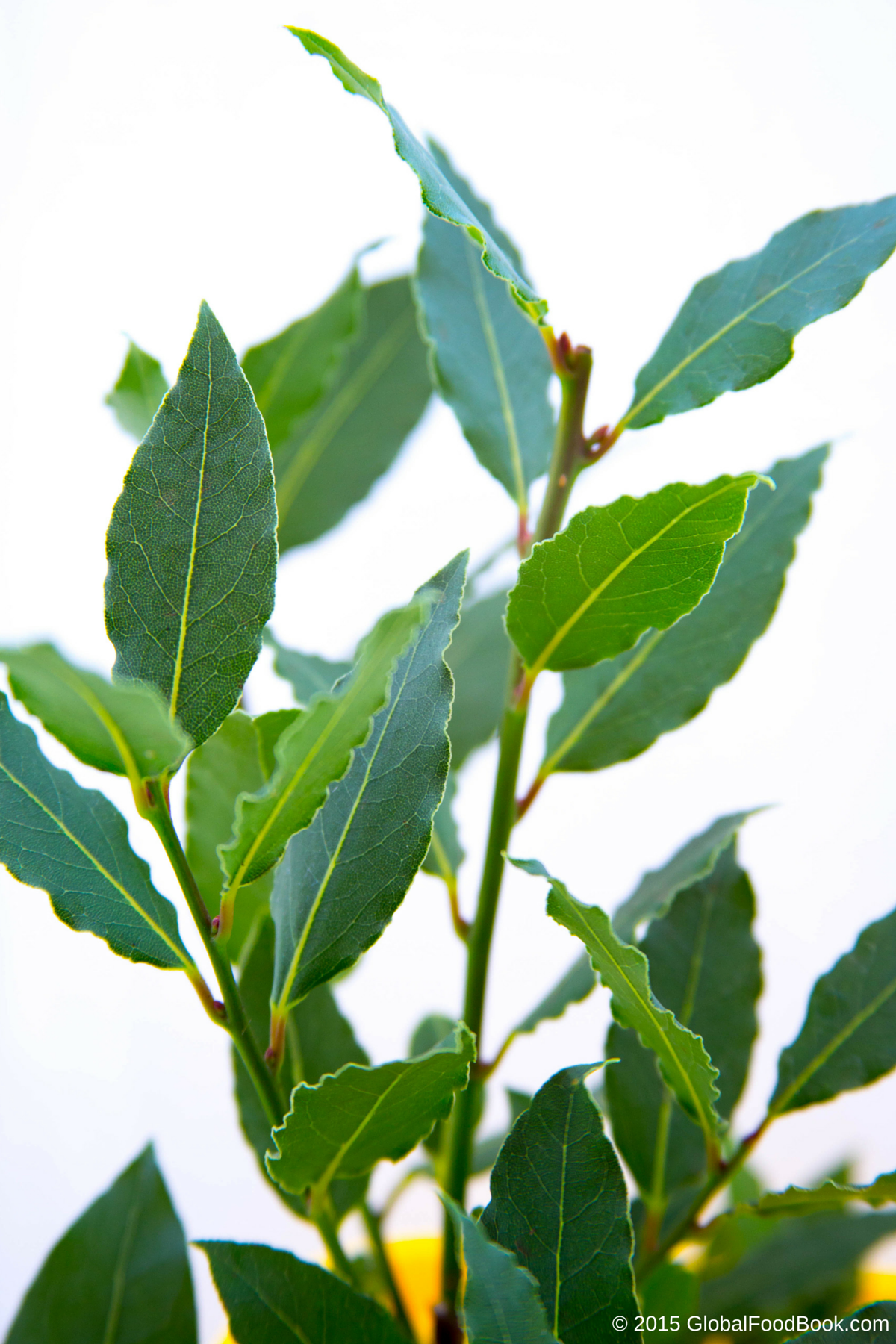 THE IMPACTS OF BAY LEAF ON HEALTH