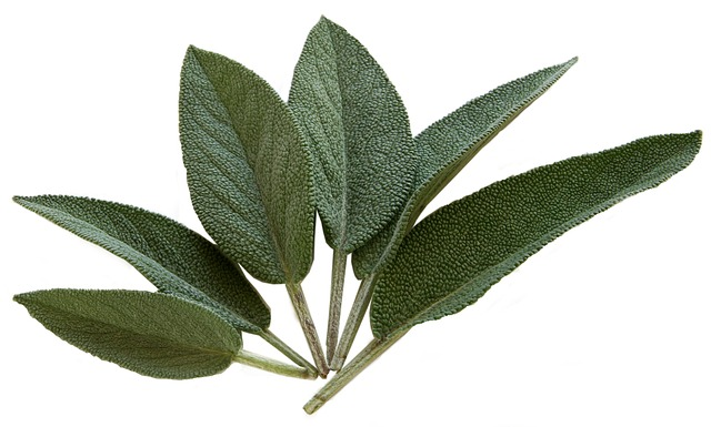 What Do You Know About Sage Salvia Officinalis