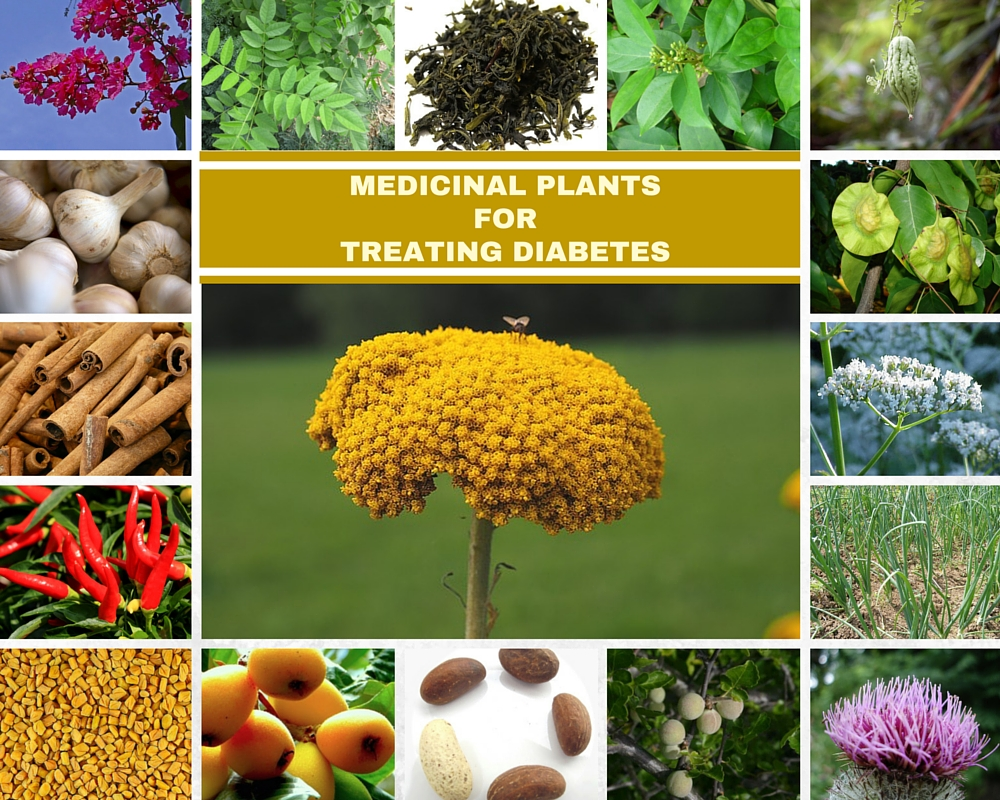 18 MEDICINAL PLANTS FOR TREATINGDIABETES