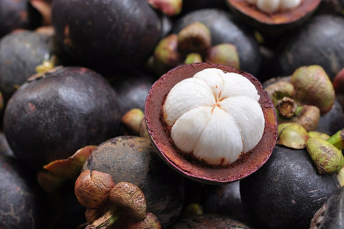 18 WINNING FACTS ABOUT PURPLE MANGOSTEEN
