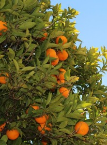 benefits of tangerine fruit