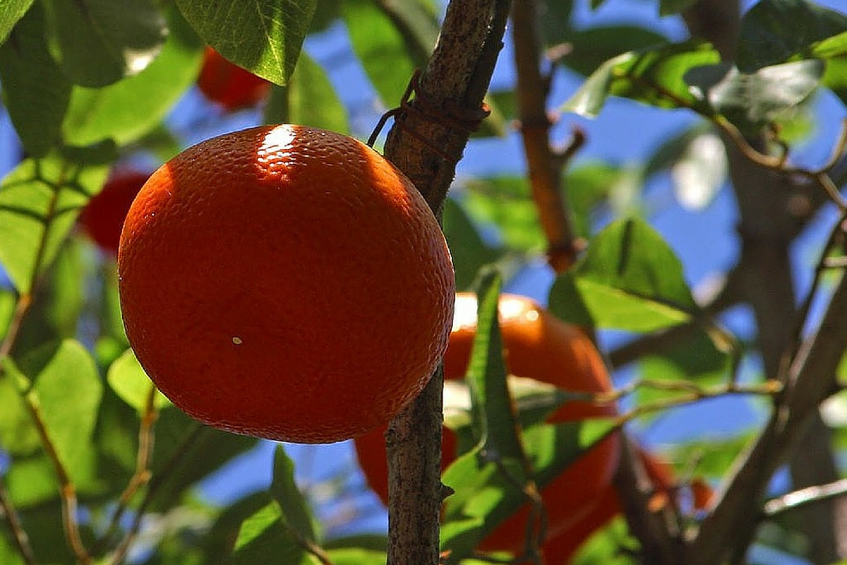 WHY DO WE NEED TANGERINE?