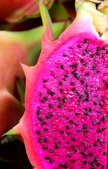 red-fleshed pitaya
