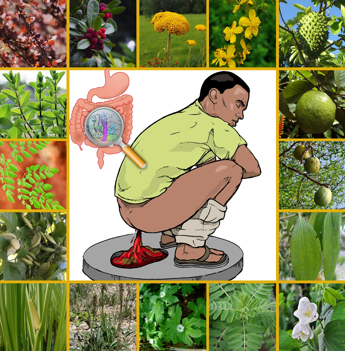 18 POWERFUL MEDICINAL PLANTS FOR TREATING DIARRHEA
