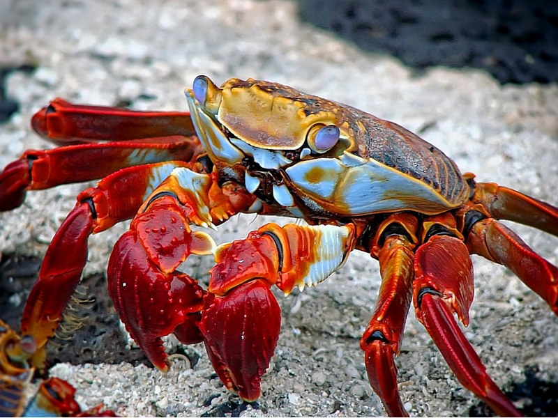 Can you eat mud crab while pregnant best crab for What kind of fish can you eat while pregnant