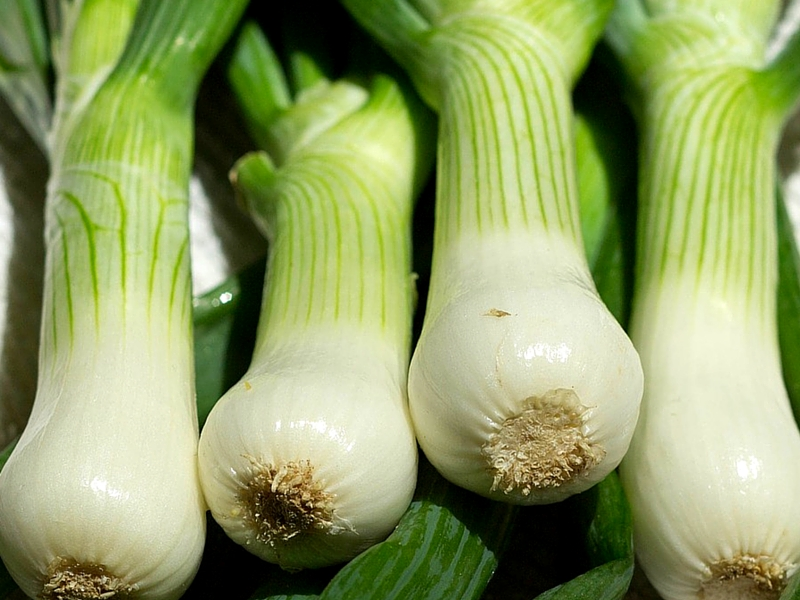 26 peculiar benefits of scallion spring onion
