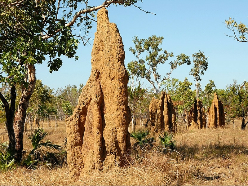 12 breathtaking benefits of termites