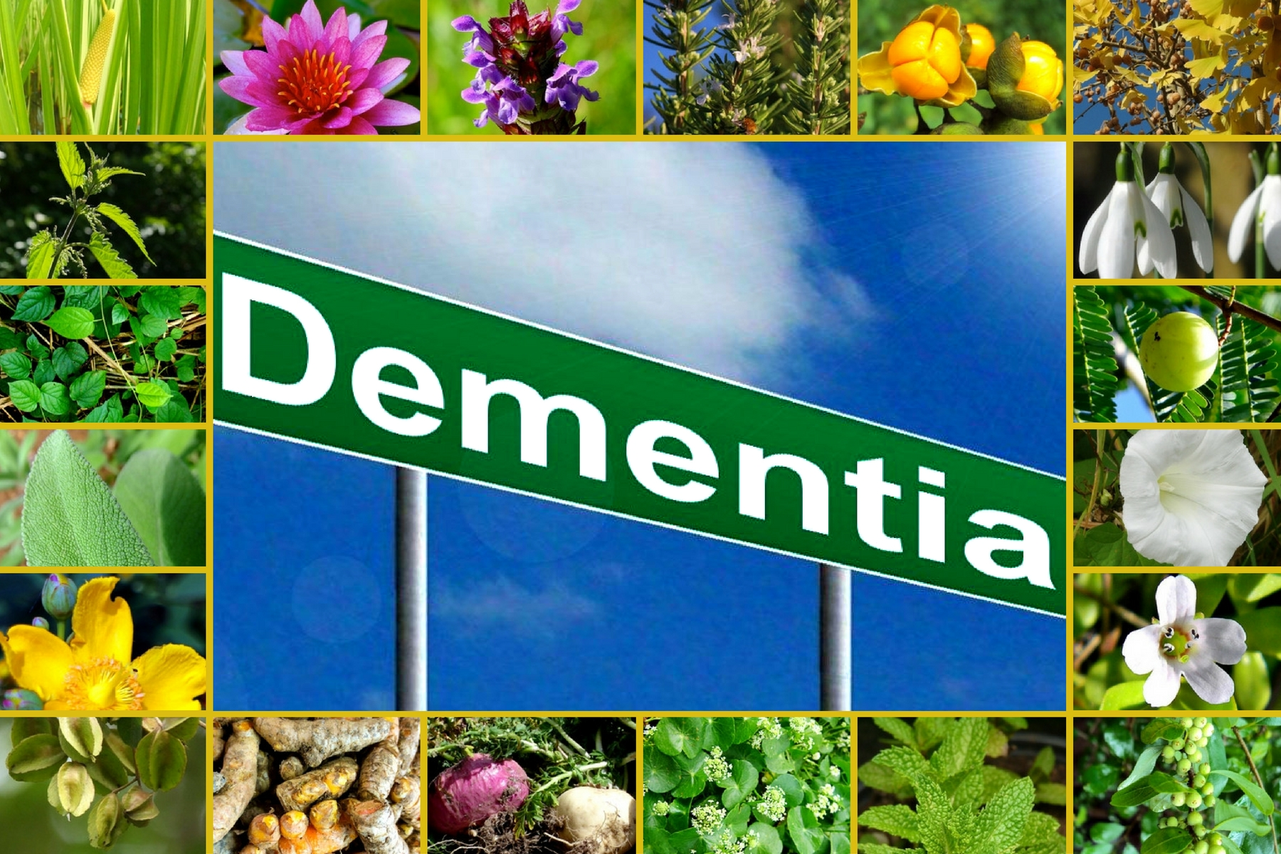 23 POWERFUL HERBS FOR TREATING DEMENTIA (1)