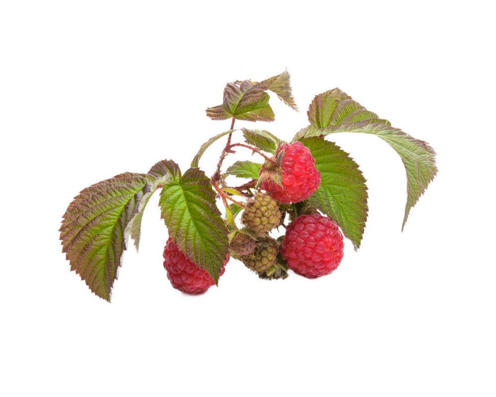 raspberry juice health benefits