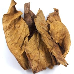 tropical-almond-leaves