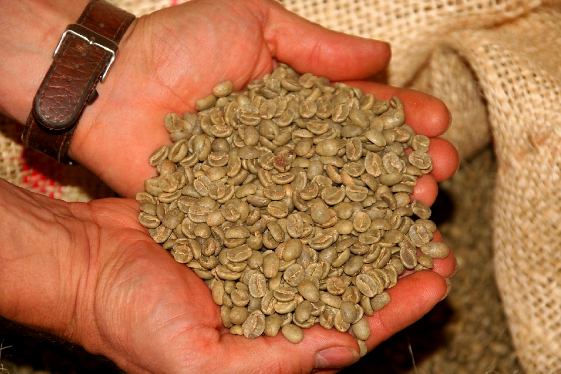 Green coffee beans extract: Weight loss benefits, Uses and Side effects