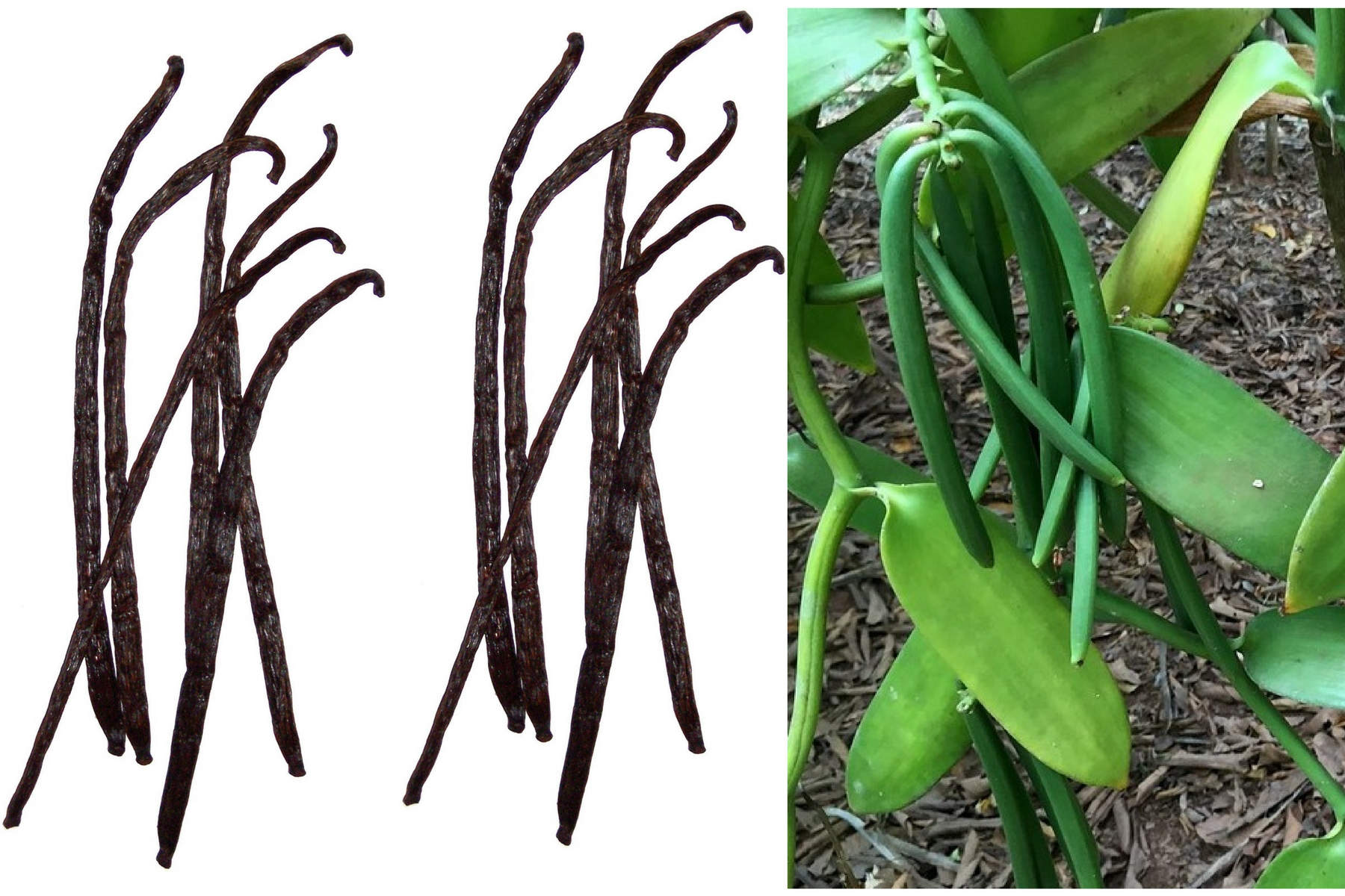 incredible benefits of vanilla