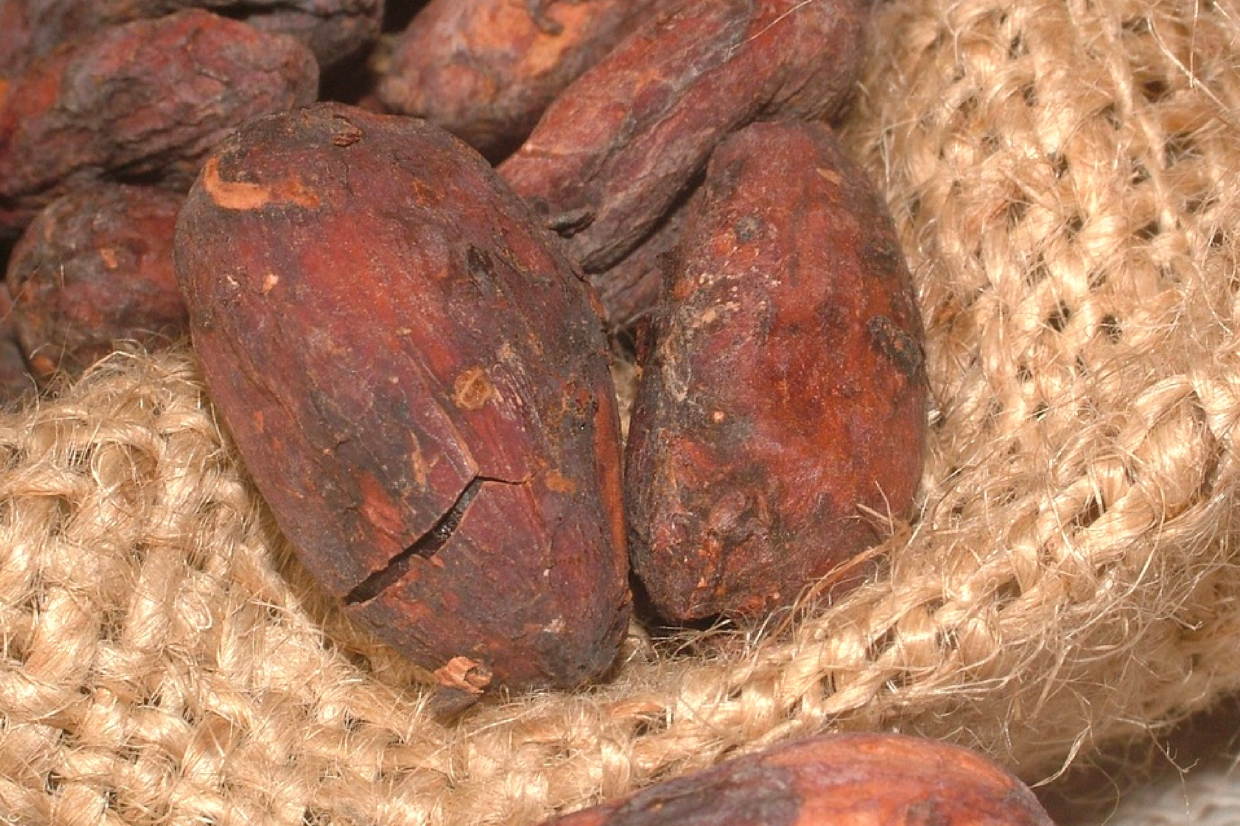 here are some exceptional benefits of cocoa