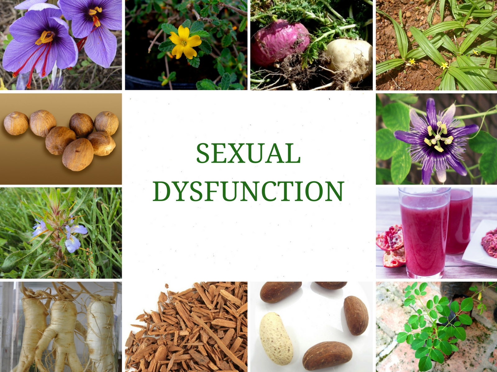 12 POWERFUL HERBS FOR TREATING SEXUAL DYSFUNCTION (IMPOTENCE)